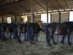 cavalli_da_dietro